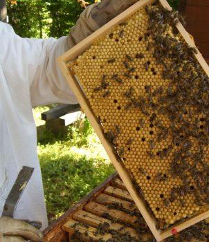 Imkertreffen am Vereinsbienenstand – 2018