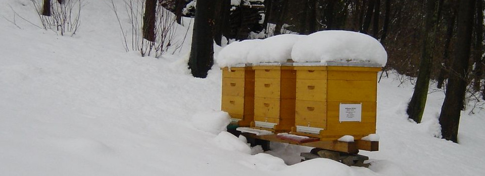 überwinterung der bienenstöcke